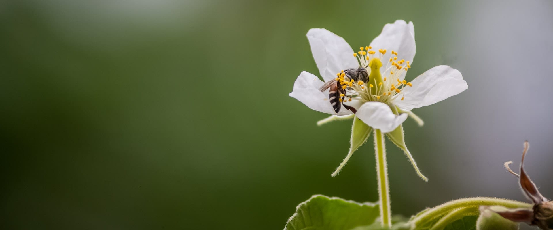 Bees with White Flower